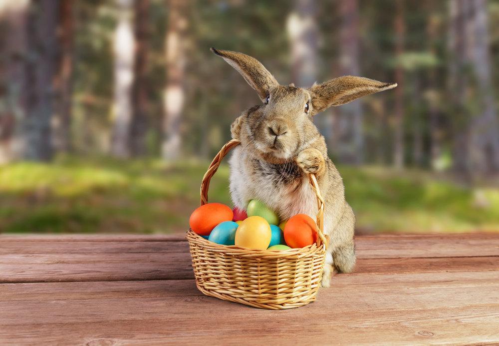 поздравления с праздником от зайцев поваром судне невозможна