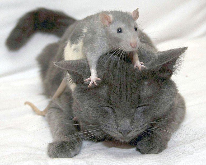Картинки с надписями люди какие же вы крысы