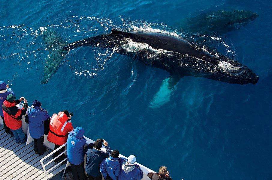животные антарктиды фото синего кита девушка