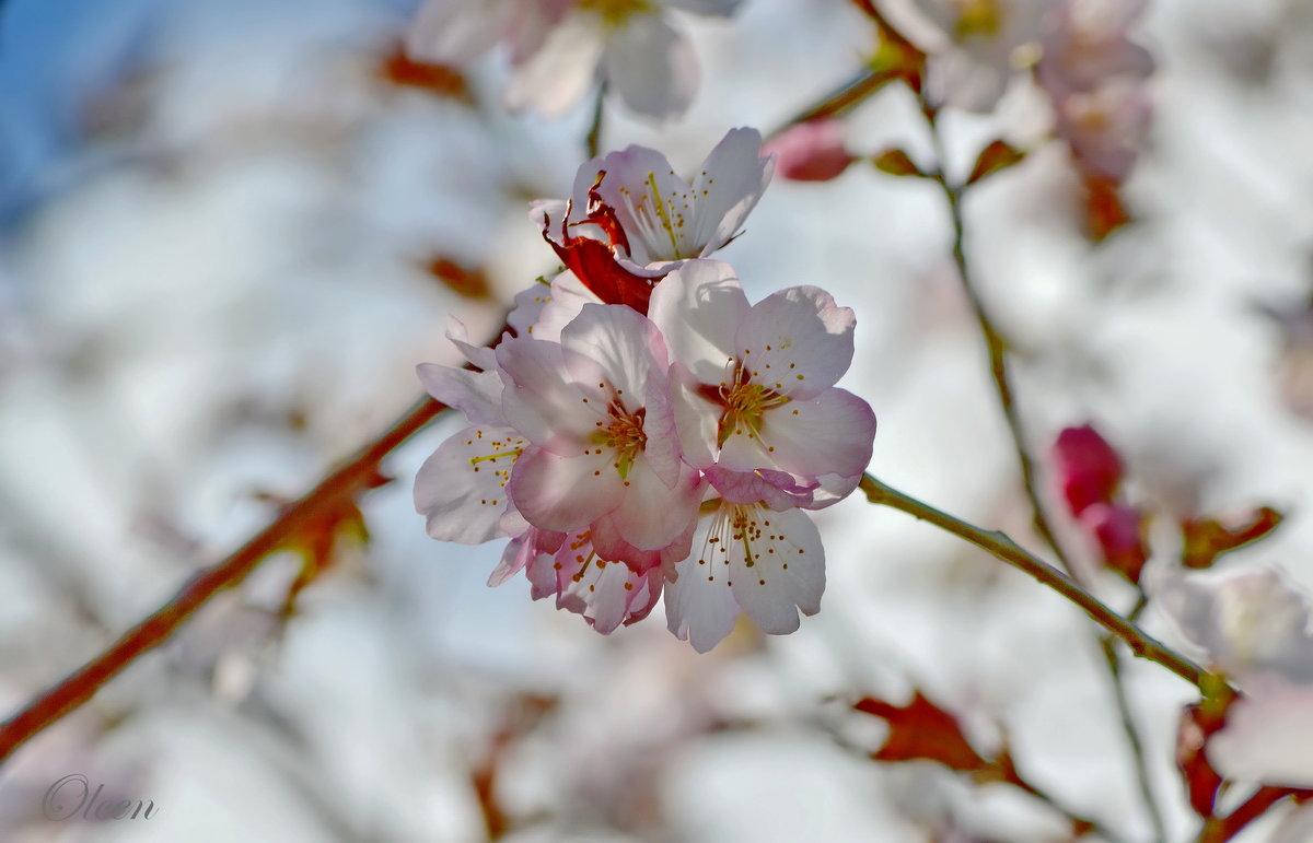 кадр пора года весна картинки мебели для