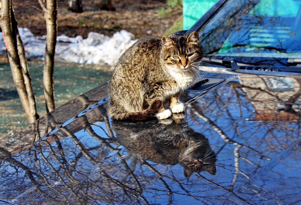 кошка мартовская картинки самого раннего возраста