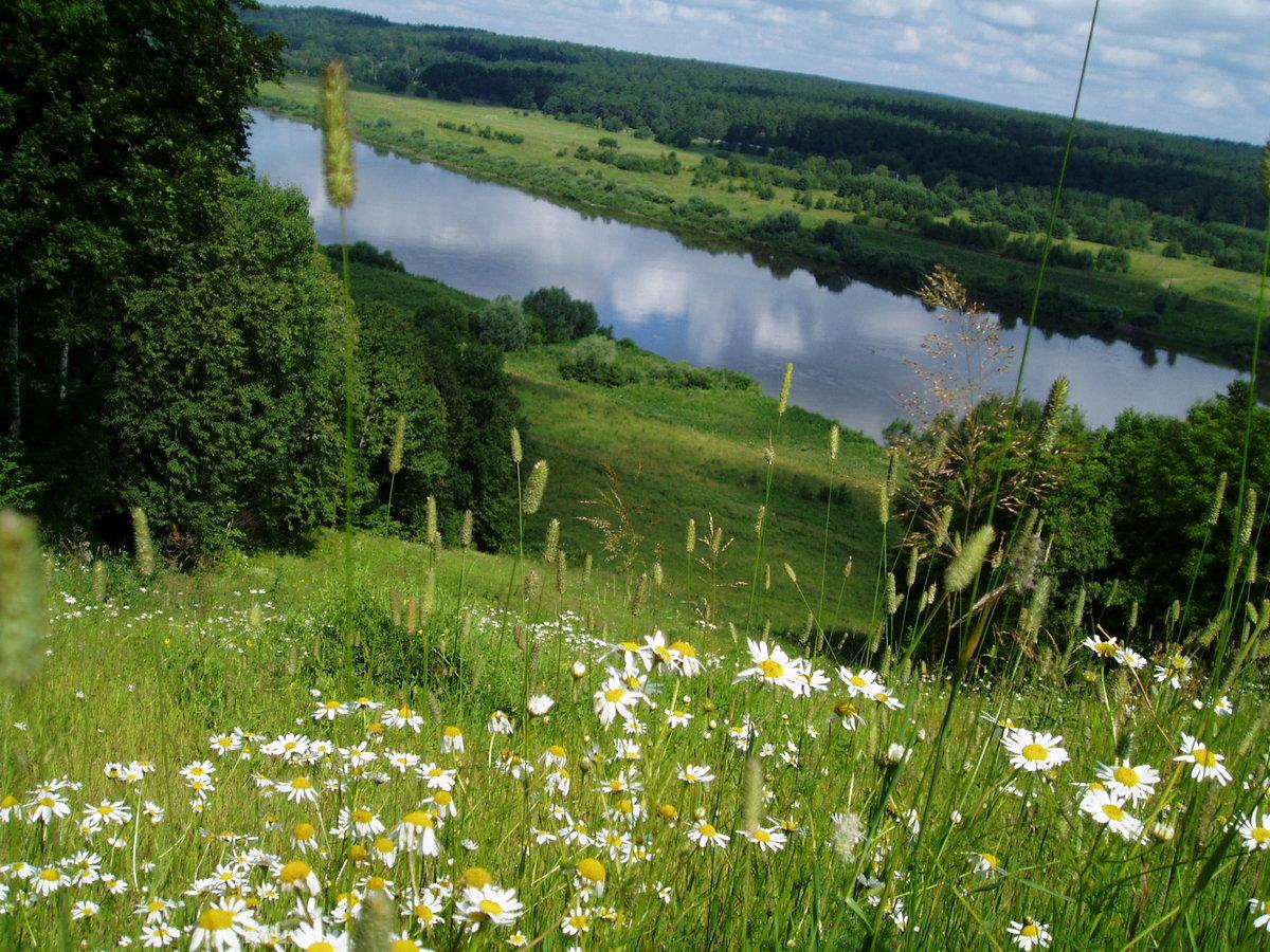 Картинки ромашки поле река, открытку