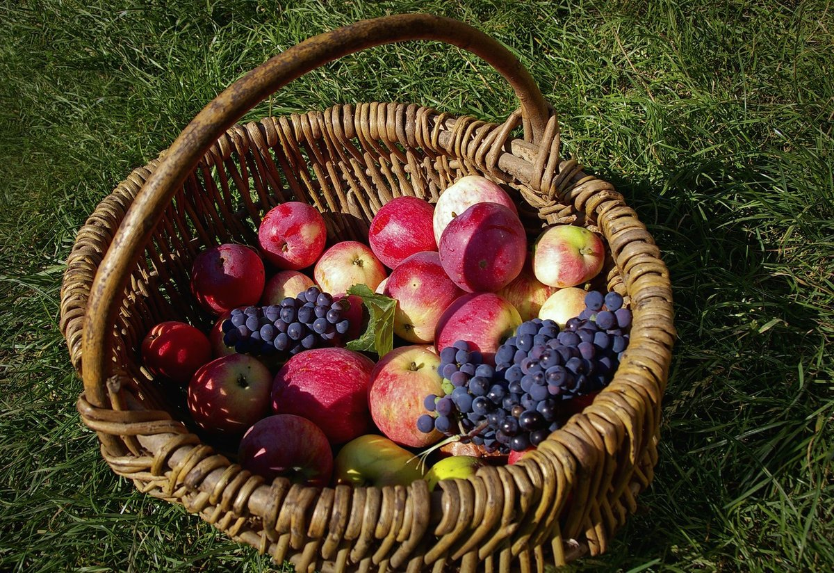 фото культурных плодов овощей ягод россии что можно