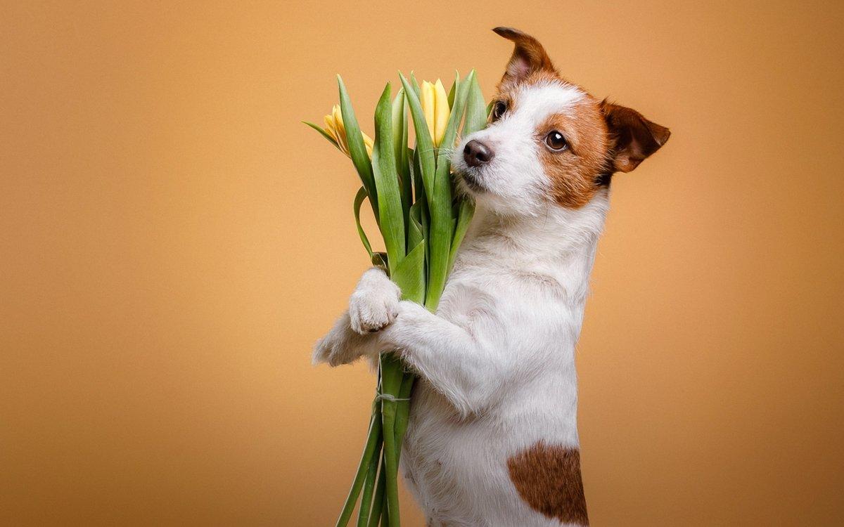 Биглем, открытка 8 марта щенок