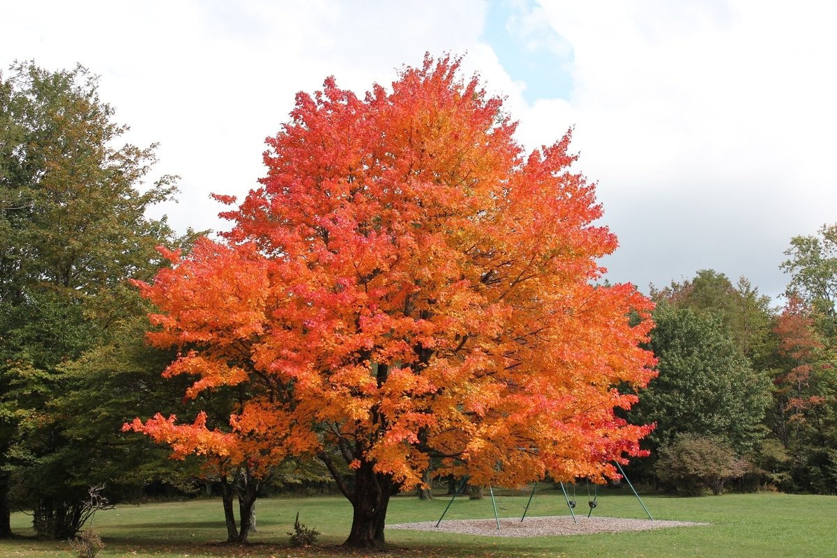 Деревья фото картинки и названия