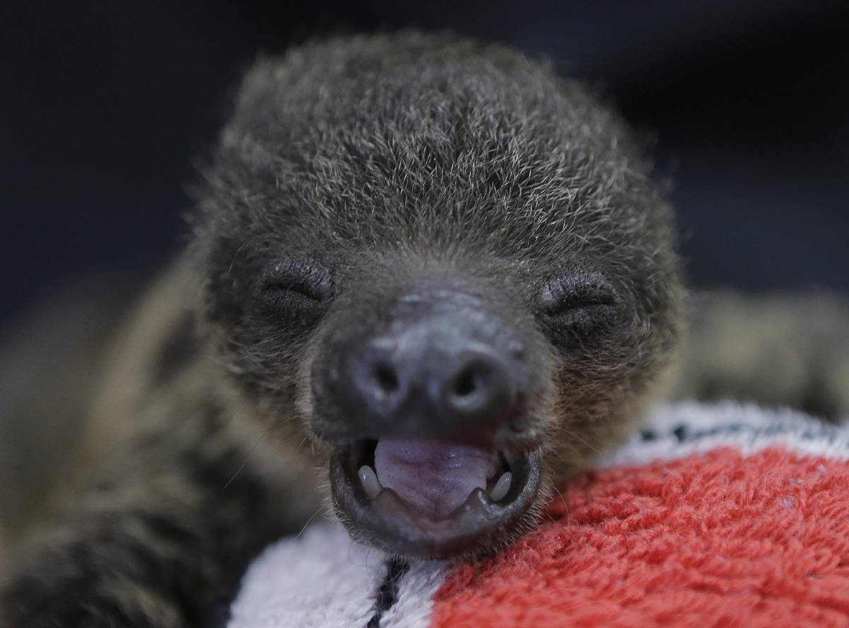 картинки маленьких ленивцев туристическая