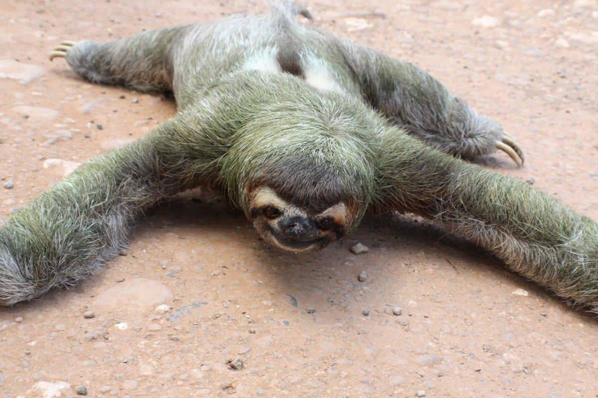 Картинки приколы с ленивцами