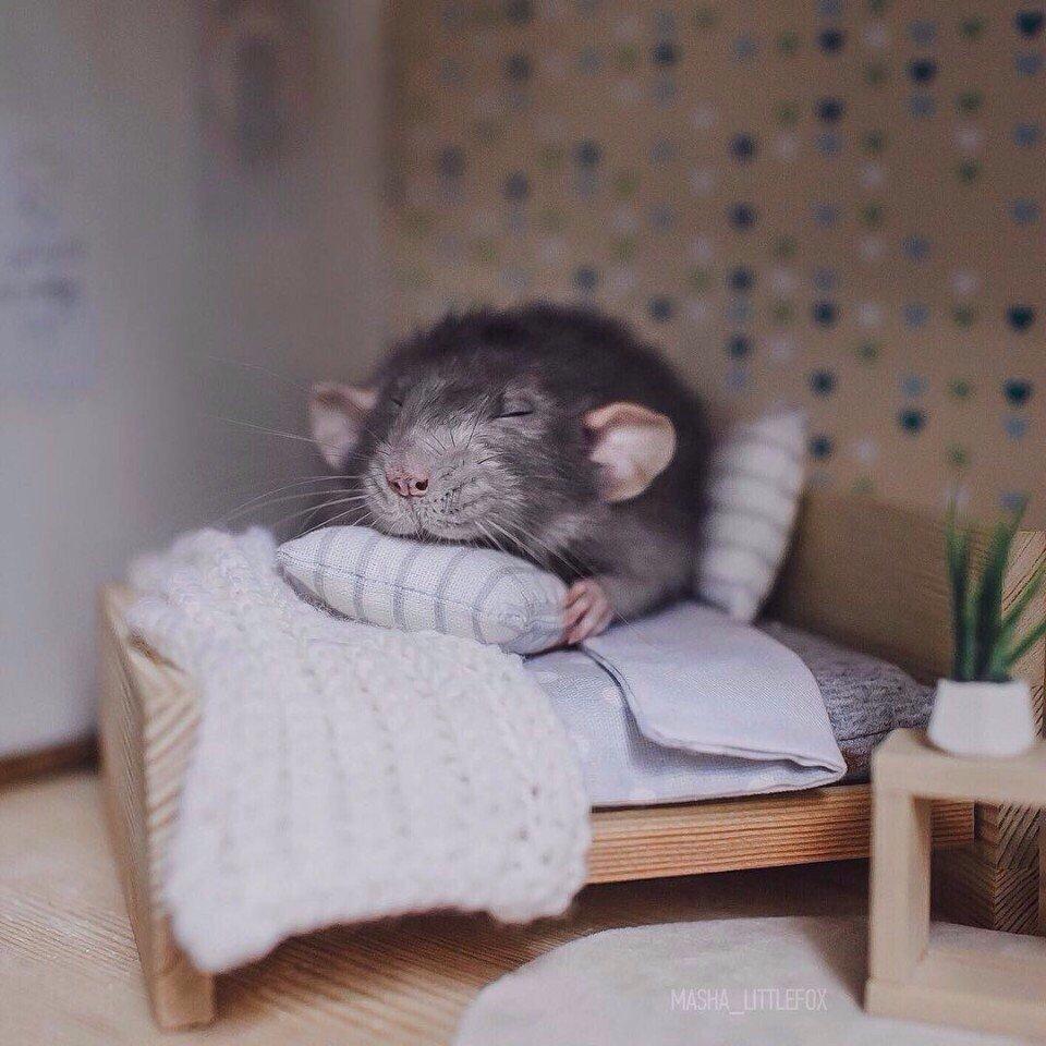 Доброй ночи хомячок картинки