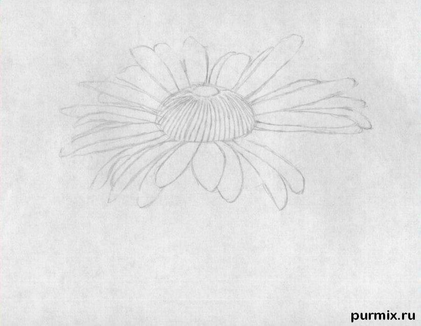 ромашка рисунки карандашом поэтапно отлично, если