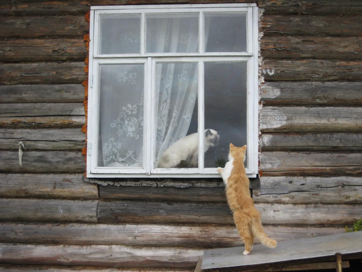 День заглядывания в окна открытки