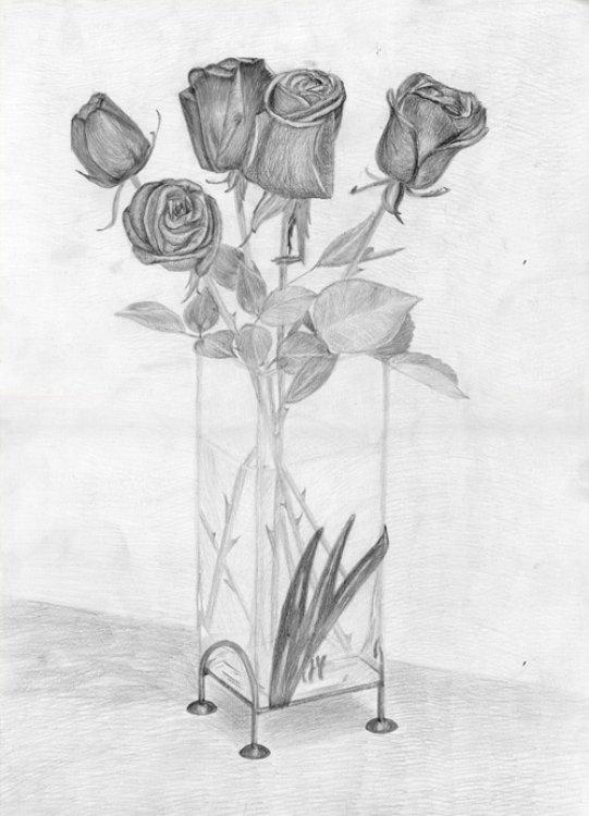 Букет роз карандашом картинка
