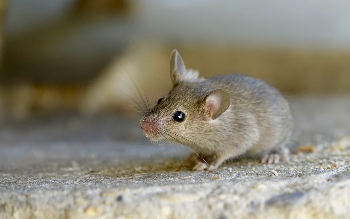 появляются фотографии зеленых мышей очень