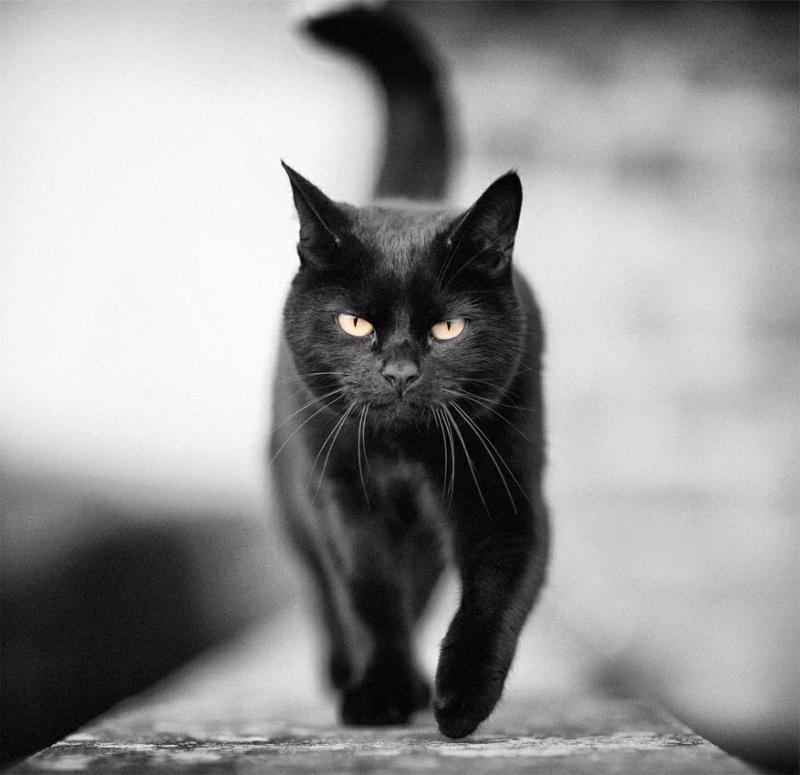Смешные картинки черных, день