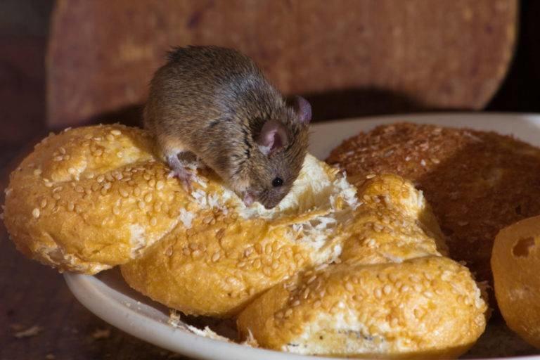 Мыши на производстве уничтожение