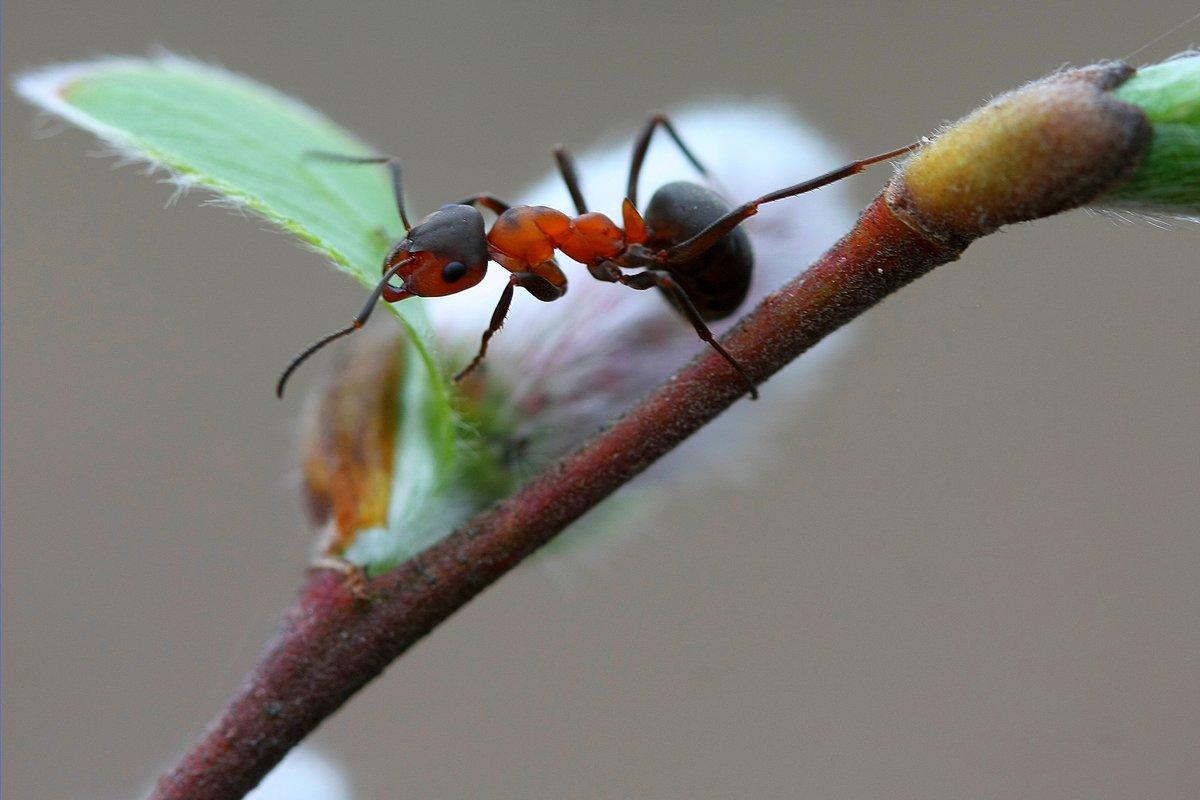 полностью картинка первые насекомые нас нет