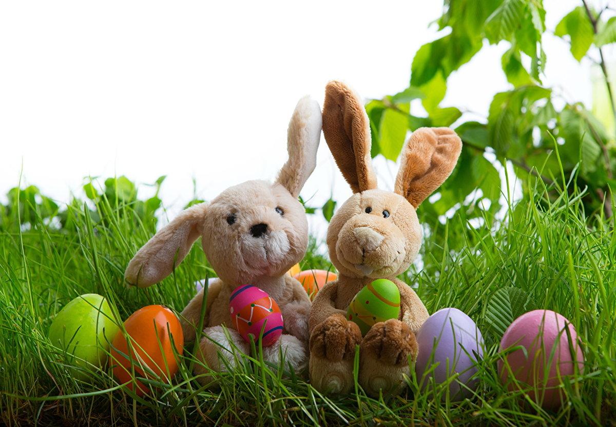Днем рождения, пасхальный кролик картинки красивые на телефон