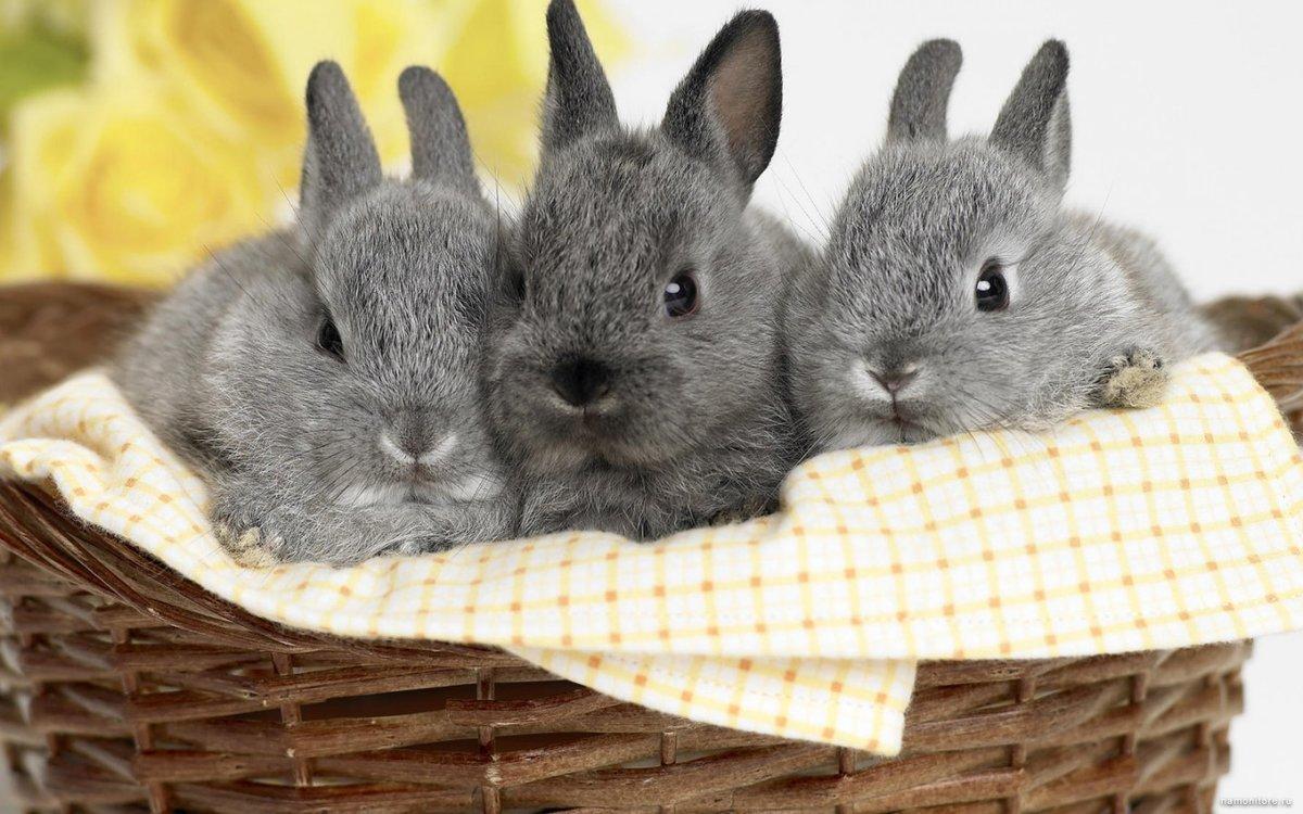 Для самой, картинка с зайчатами
