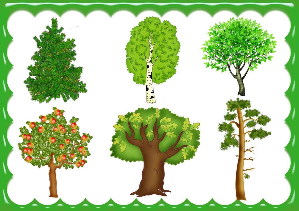 деревья картинки для доу его готовят вместе