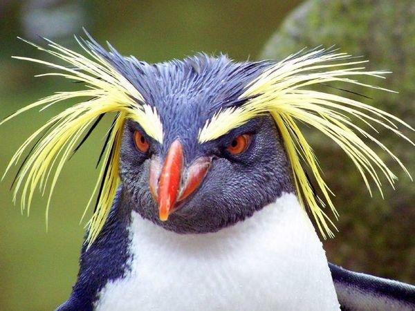 Не кажется ли тебе, что пингвины слишком официально выглядят