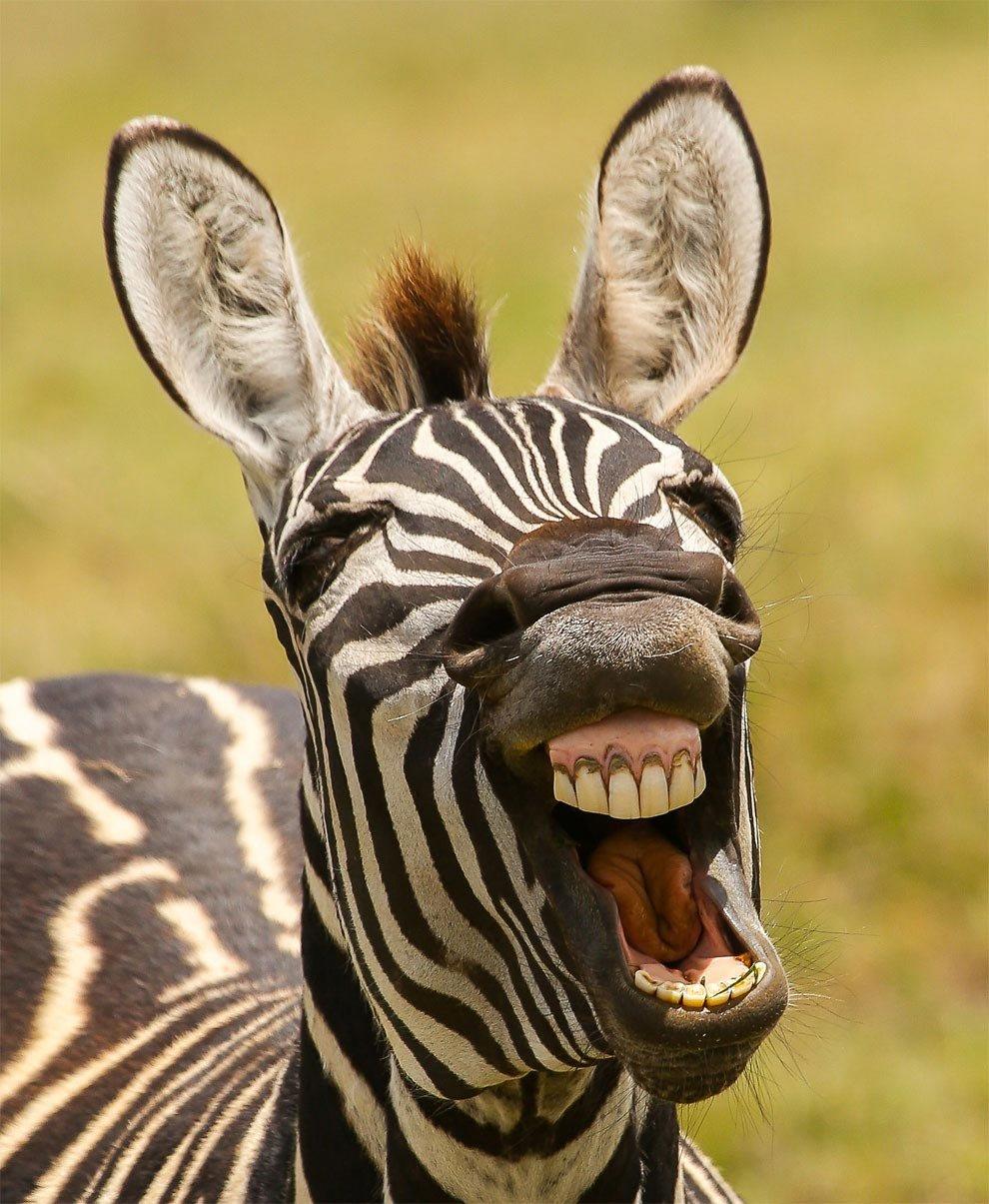 Открытку, прикольные красивые картинки животных