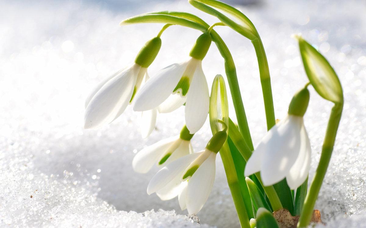 Открытки на тему зима в апреле