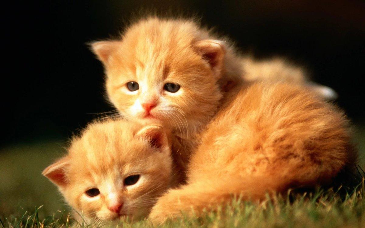 Картинка с котиком