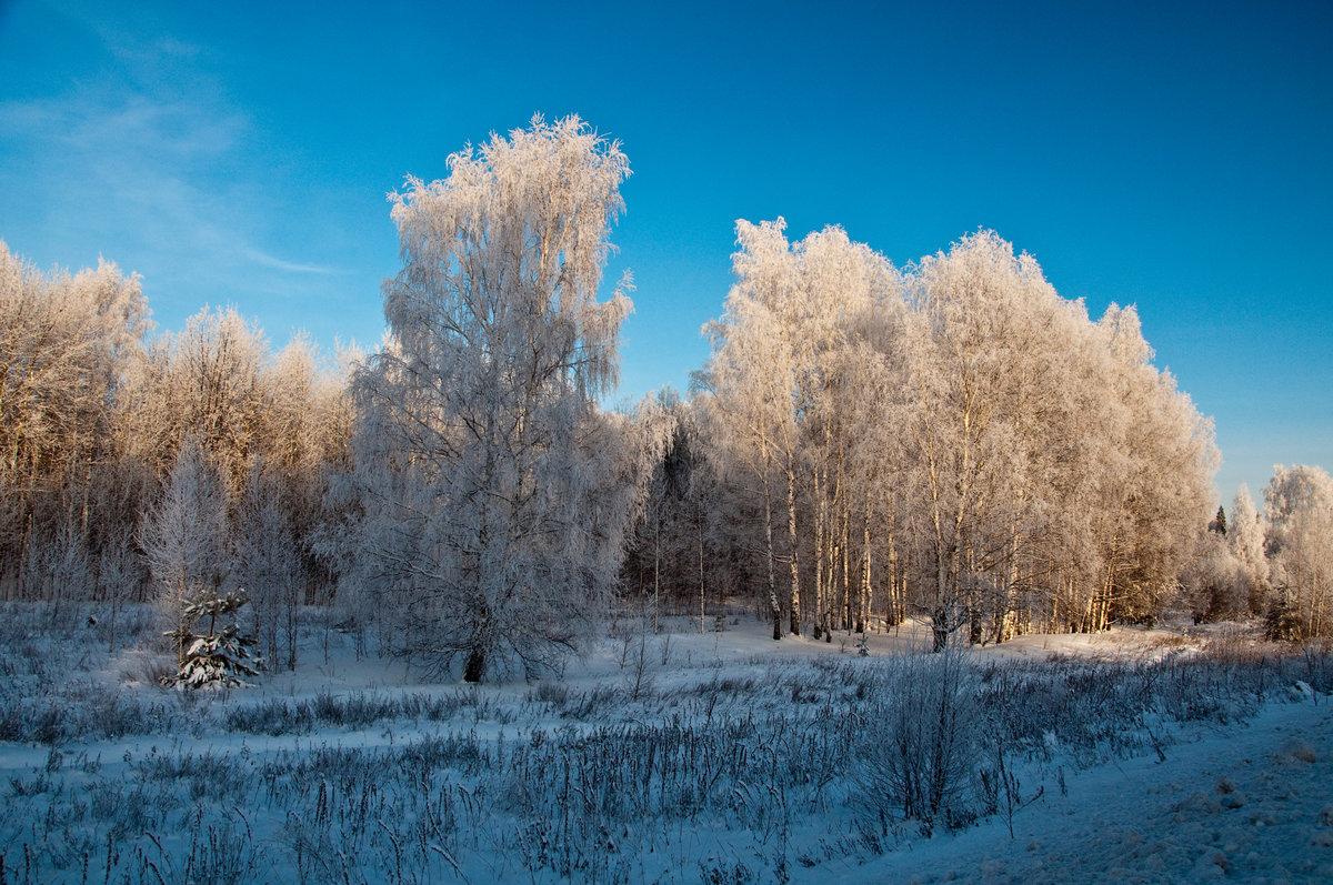 сестры фотографии о красоте зимы этой статье