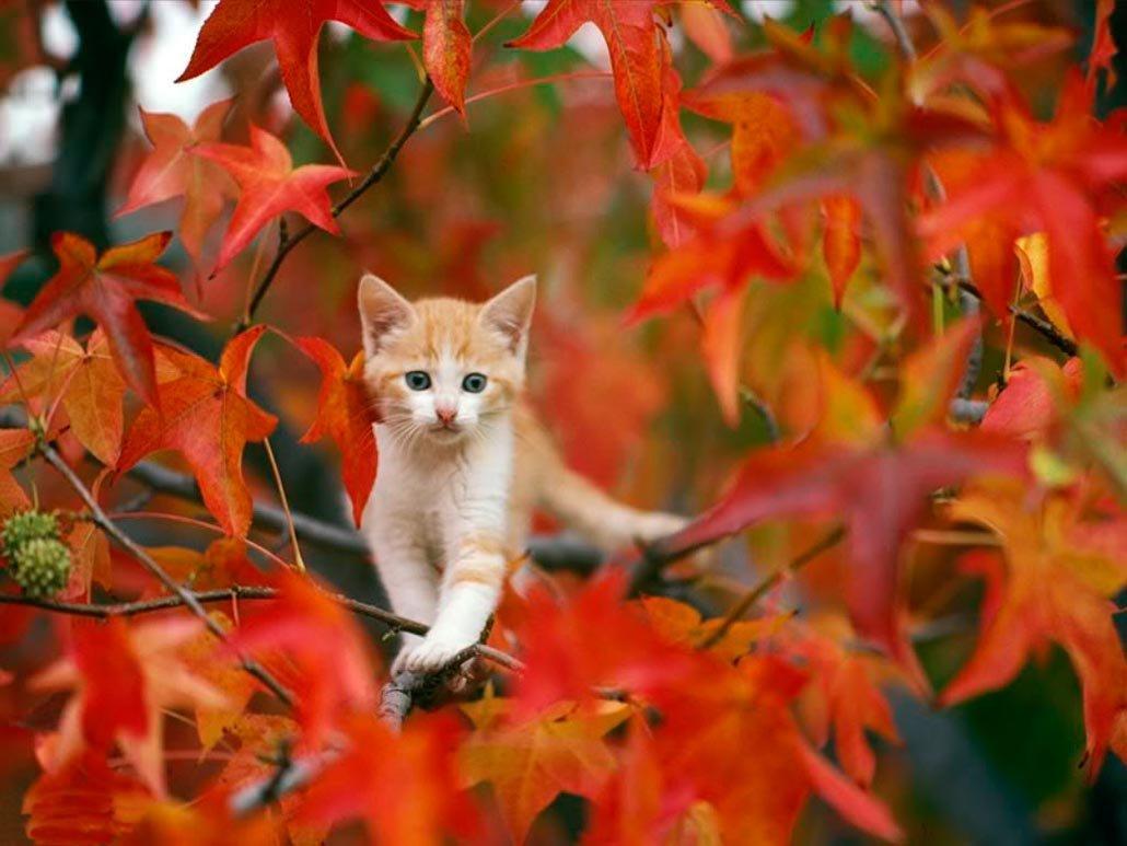 красота картинки про осень и животных кактус надо достаточно