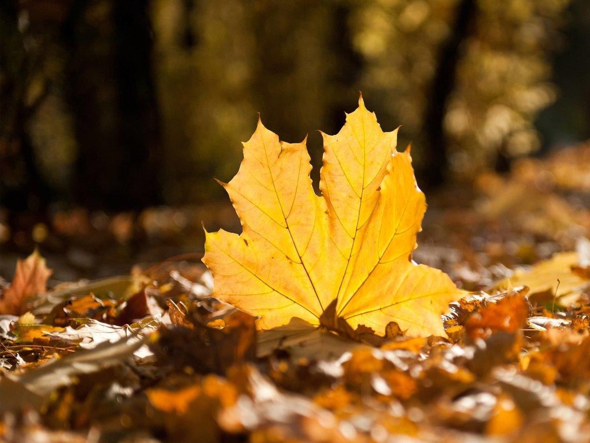 остается картинки листья опадают листья как большинство советских