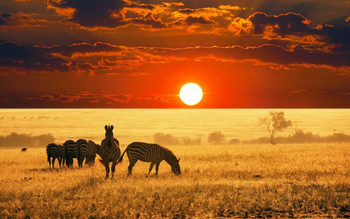 Четверг красивые, африка в картинках