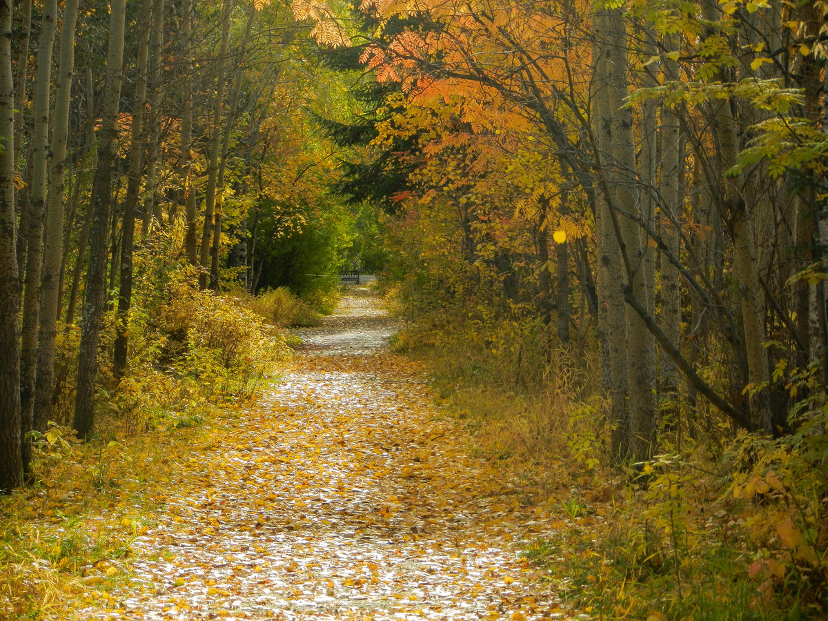В старом парке заблудилась осень#осень #тишина