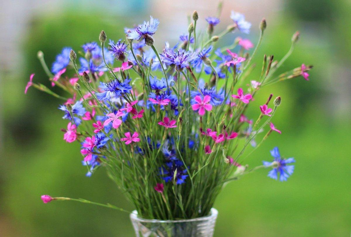 С днем рождения открытки красивые полевые цветы, дню учителя