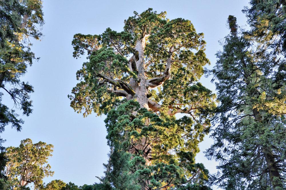Картинки высота дерева
