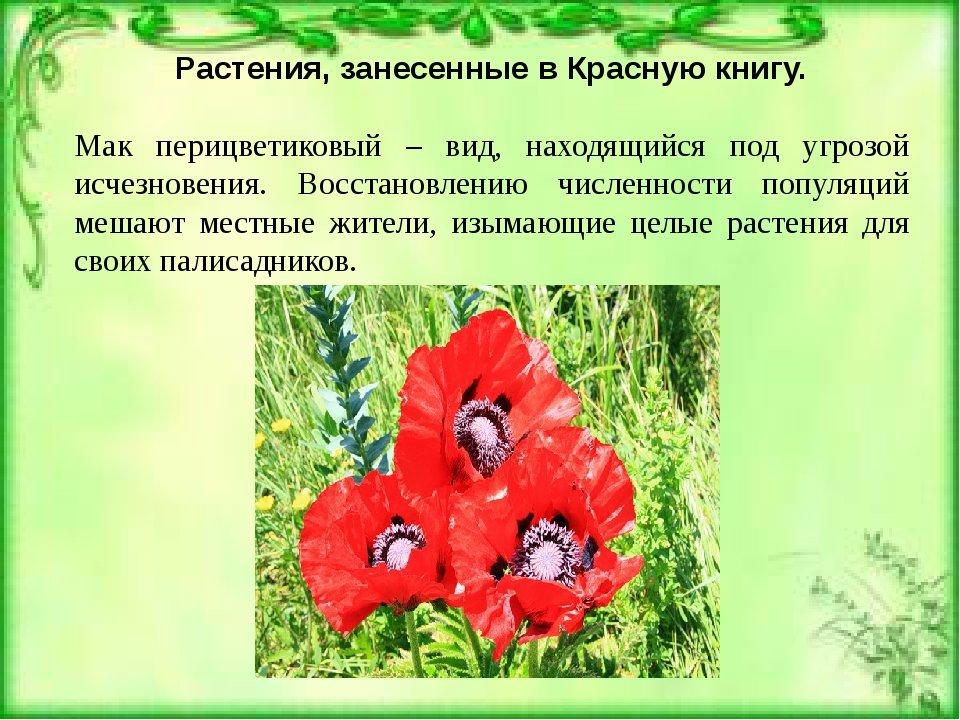 растения записанные в красную книгу с картинками основном, выпускались кожзаменителя
