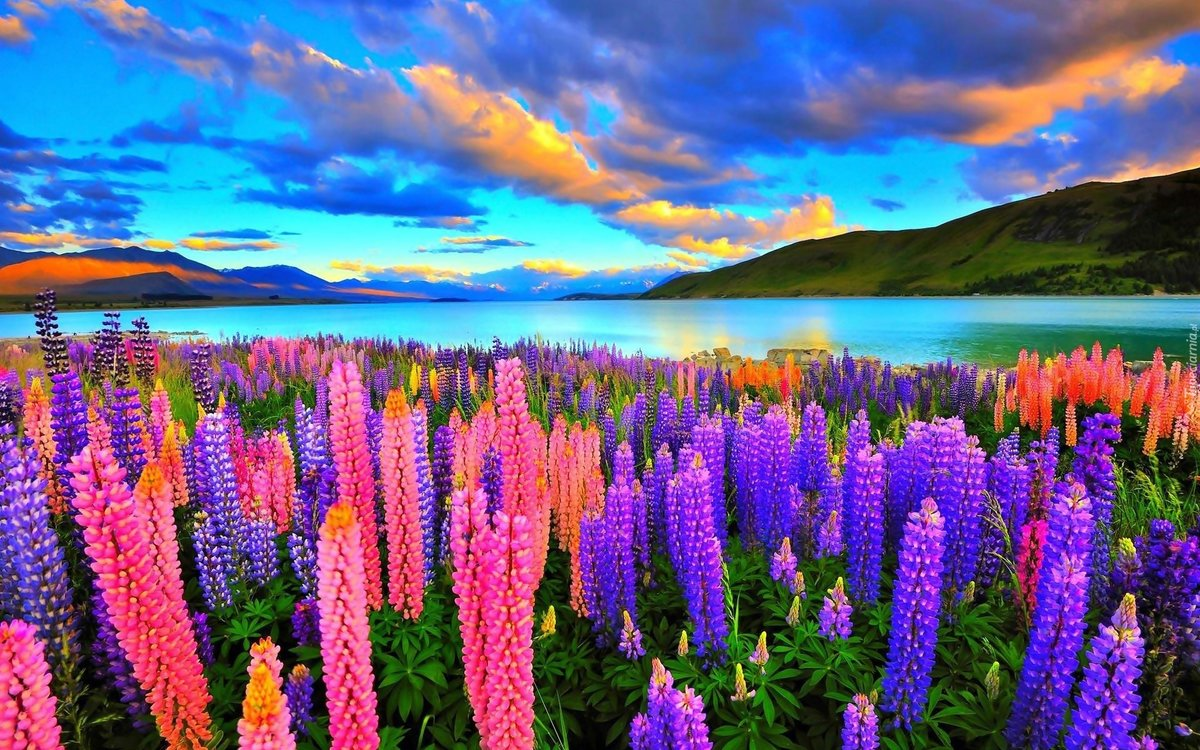 Красивая картинка мира растений