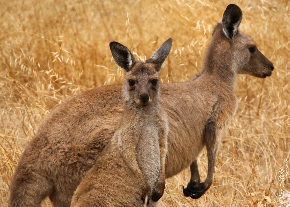 фотографии живности в австралии вот