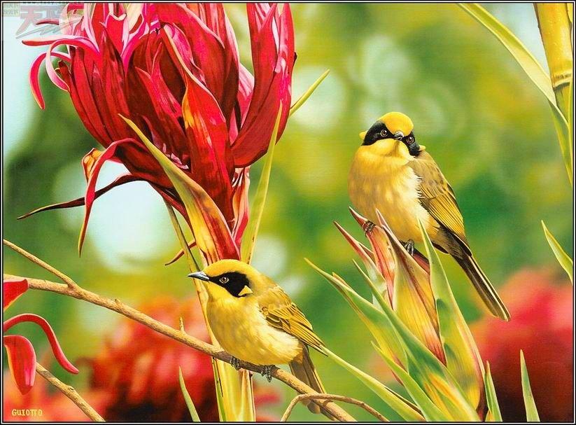 Картинка анимации птиц, картинки билли