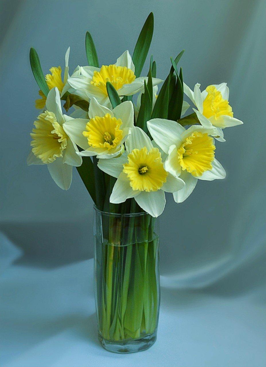 картинки цветы нарциссы букеты движение призвано объединить