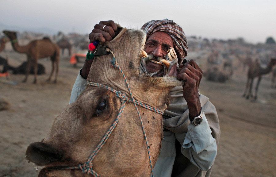 Ярмарка верблюдов (9 фото)