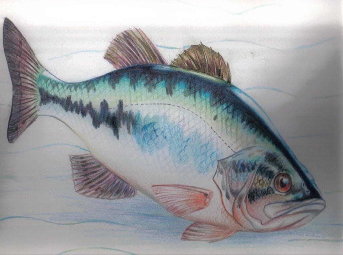 Картинки нарисованные карандашом рыбка