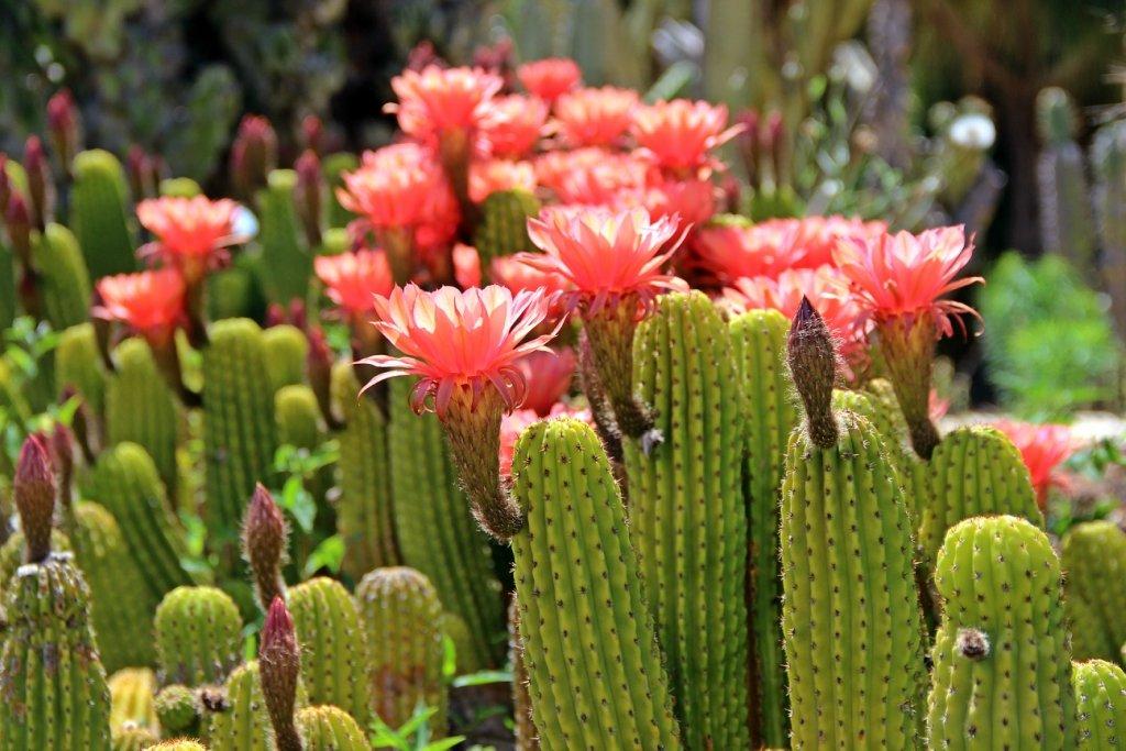 воспринимайте картинки мексиканских кактусов фотографии, расположение достопримечательностей