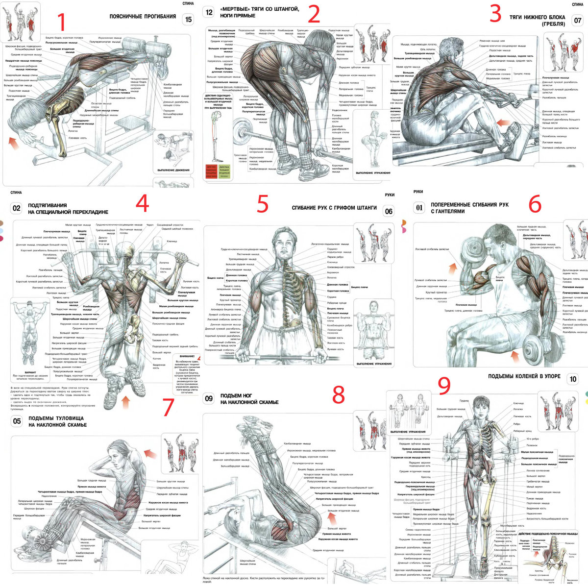 Упражнения для начинающих в спортзале с картинками