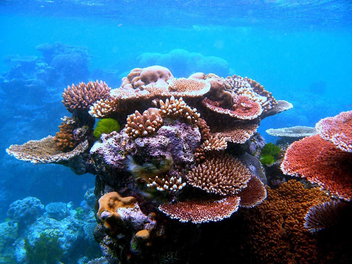 Корон нарисовать, картинка с кораллами