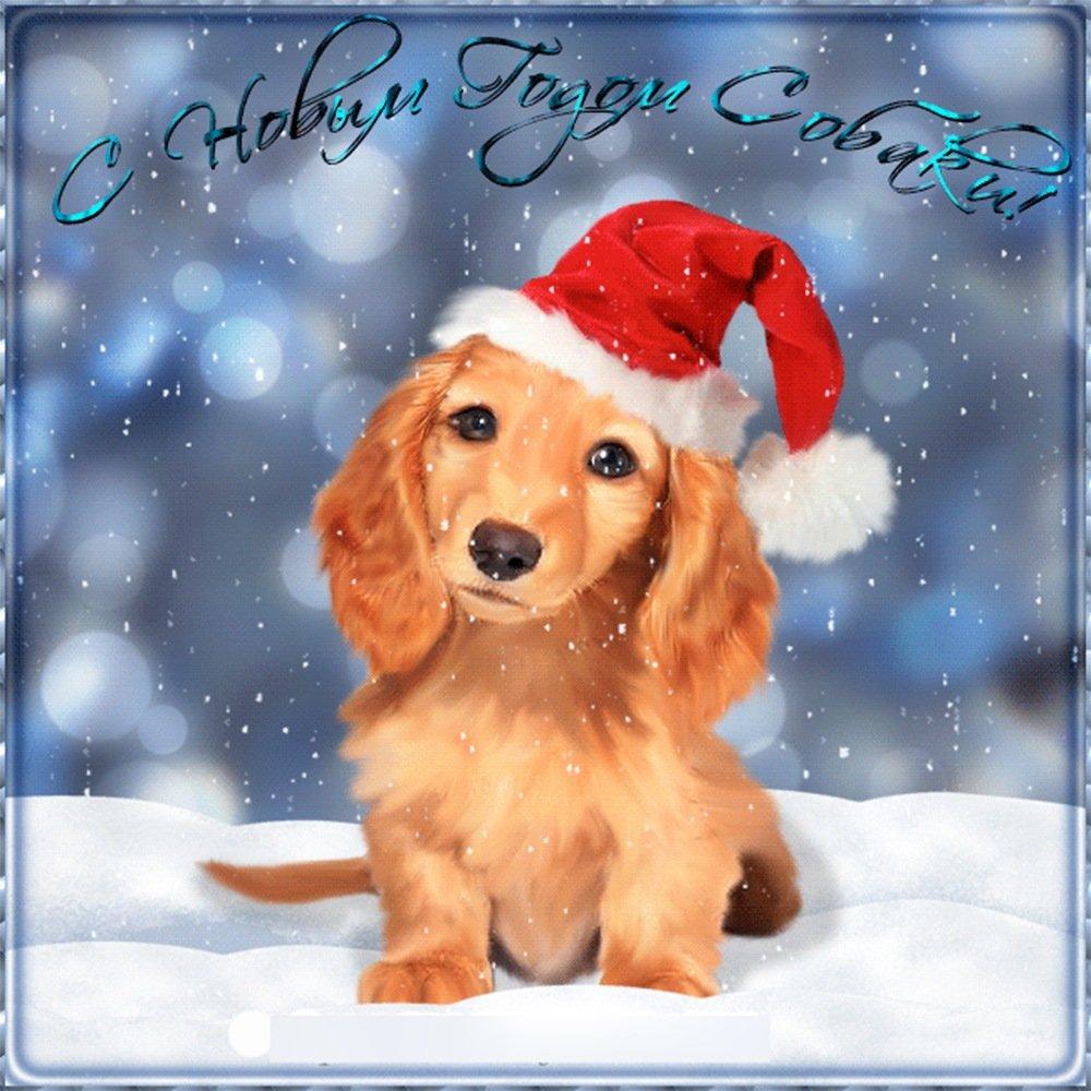 Иматра, открытки с собаками новый год