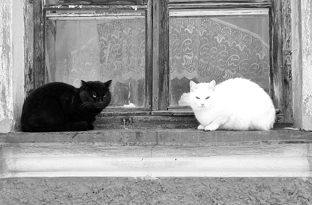 Картинка два котенка черный белый
