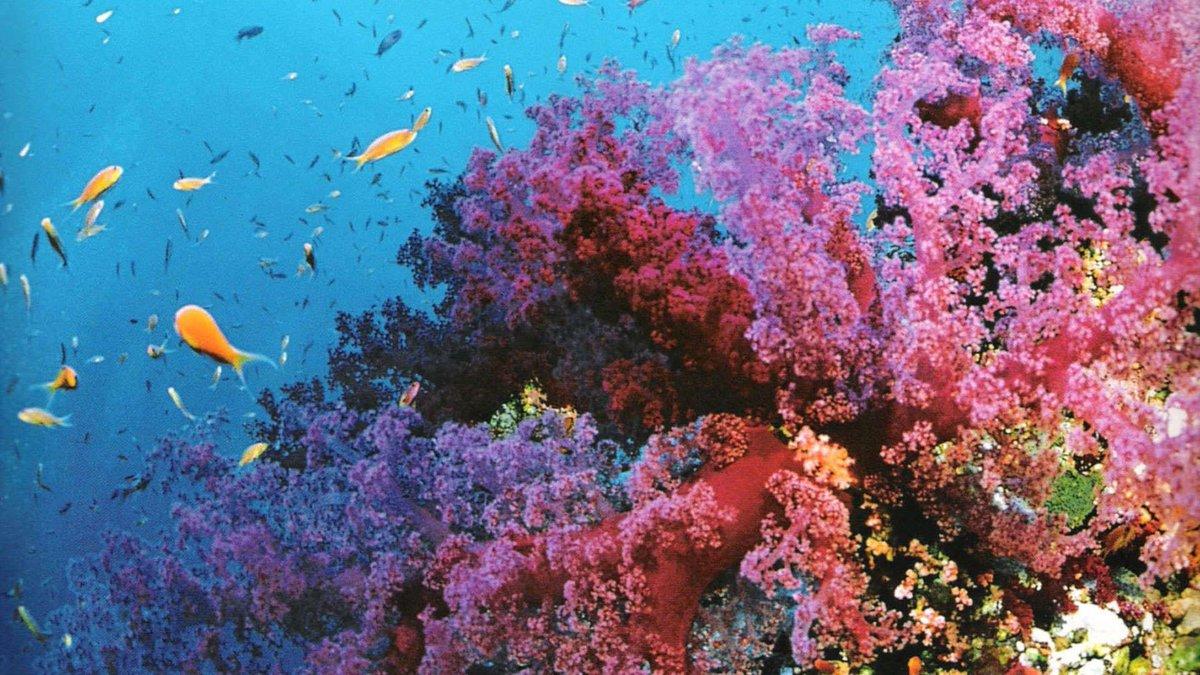 Красота подводный мир картинки чтобы