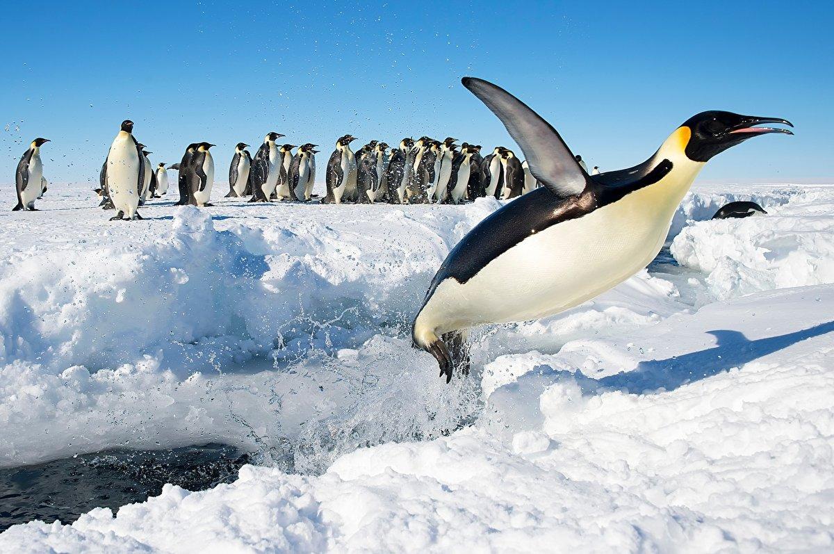 Картинка с пингвинами 94