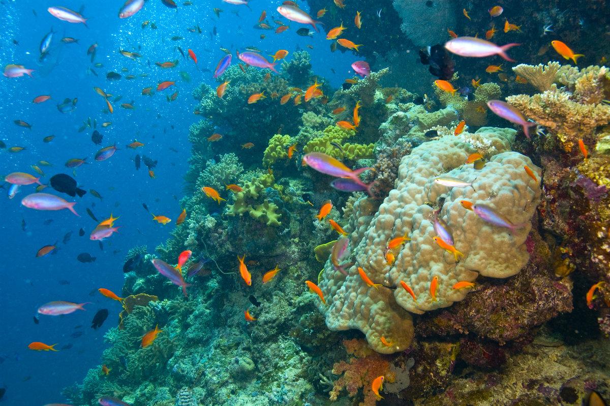шатенку звезда картинки барьерного рифа дама