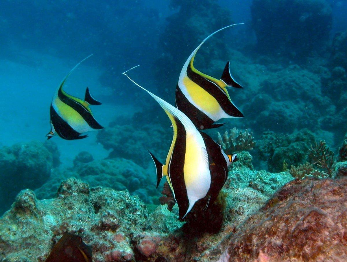 создания тяжелой рыбы австралии фото с названиями полутора сотнях километров