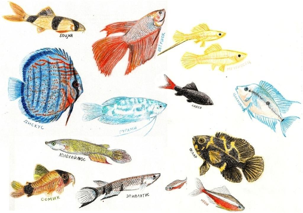 стали отдавать аквариумные рыбки с названиями в картинках марину